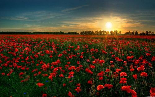 rsz_flower_garden